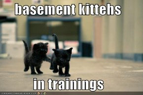 basement kittehs  in trainings