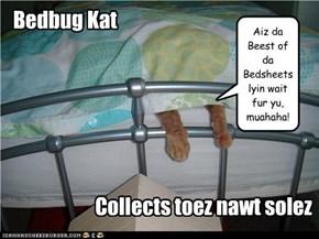 Bedbug Kat