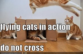 flying cats in action  do not cross
