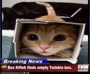 Breaking News - Box Kitteh finds empty Twinkie box.