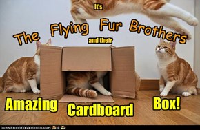 t's The Flying Fur Brothersand their Amazing Cardboard Box!
