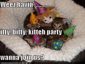 Weez havin'............. itty, bitty, kitteh party wanna join us?