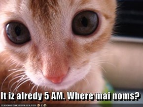 It iz alredy 5 AM. Where mai noms?
