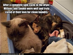 After a complete spin cycle in the dryer, Mittens and Smoke were well and truly cured of their love for clean laundry.