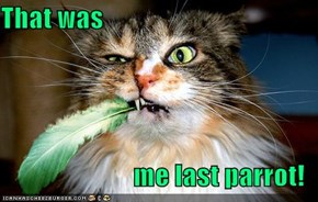 That was  me last parrot!