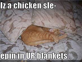 Iz a chicken sle-  epin in UR blankets