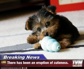 Breaking News - There has been an eruption of cuteness.