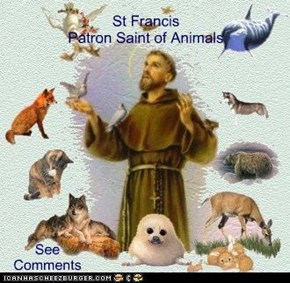 St Francis Patron Saint of Animals