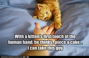 With a kitten's first touch of the human hand, he thinks...piece a cake... I can take this guy