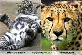 Baby Tiger's Belly Totally Looks Like Cheetah Face