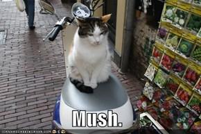 Mush.