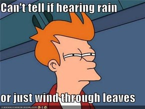 Can't tell if hearing rain  or just wind through leaves