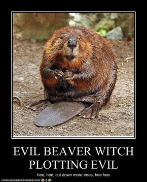 EVIL BEAVER WITCH PLOTTING EVIL