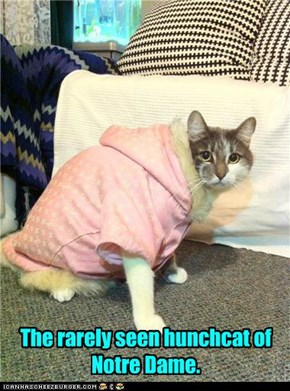 The rarely seen hunchcat of Notre Dame.