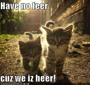 Have no feer  cuz we iz heer!