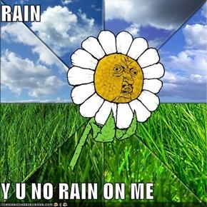 RAIN  Y U NO RAIN ON ME