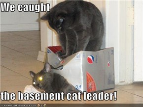We caught  the basement cat leader!