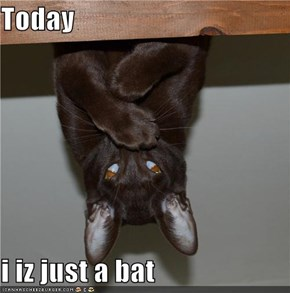 Today  i iz just a bat