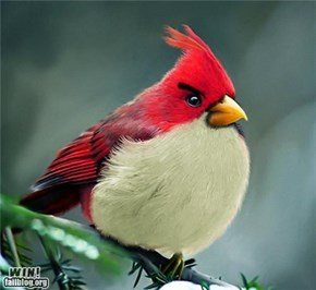 Angry Birds Photography WIN