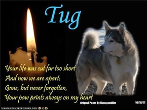 A Monday Night Candle For All Our Departed FurFriends And To Remind Us Of Those Who Still Need Us