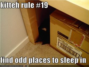 kitteh rule #19  find odd places to sleep in