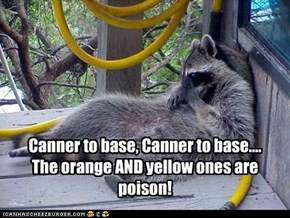 Canner to base, Canner to base.... The orange AND yellow ones are poison!