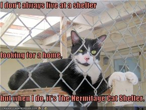 I don't always live at a shelter  looking for a home, but when I do, it's The Hermitage Cat Shelter.