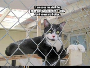 It amuses me visit the poor, captive hoomins   -  they don't know any better...