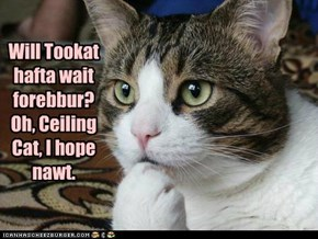 Will Tookat hafta wait forebbur? Oh, Ceiling Cat, I hope nawt.