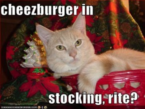 cheezburger in  stocking, rite?