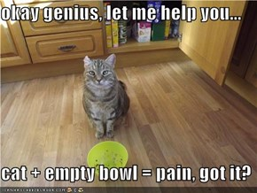 okay genius, let me help you...  cat + empty bowl = pain, got it?