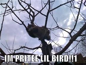 IM PRITEE LIL BIRD!!1