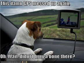 This damn GPS messed up again,   Oh, Wait, didnt I bury a bone there?