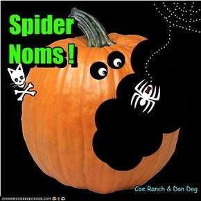 Spider Noms !