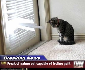 Breaking News - Freak of nature cat capable of feeling guilt