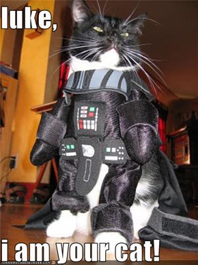 luke,  i am your cat!