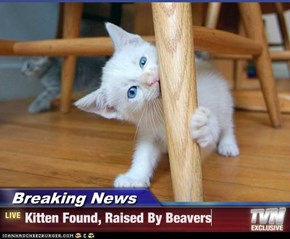 Breaking News - Kitten Found, Raised By Beavers