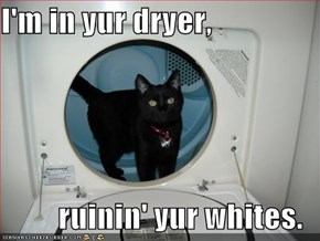 I'm in yur dryer,  ruinin' yur whites.