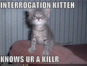 INTERROGATION KITTEH  KNOWS UR A KILLR