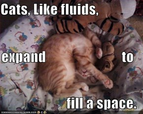 Cats, Like fluids, expand                           to fill a space.