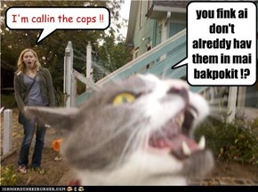 baad cat .. in yor neighbahoood