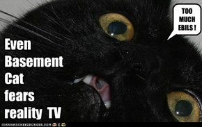 Even  Basement  Cat  fears  reality  TV