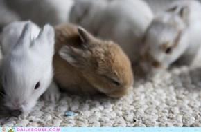 Baby Bunny Brigade