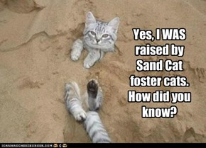 Yes, I WAS raised by Sand Cat foster cats. How did you know?