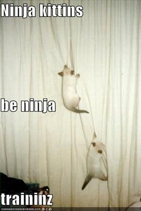Ninja kittins be ninja traininz