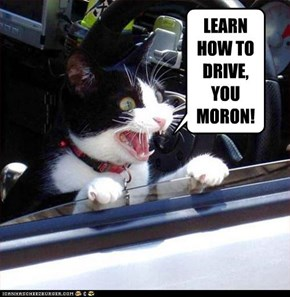 LEARN HOW TO DRIVE, YOU MORON!