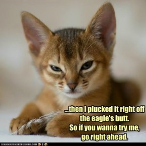 tough kitteh is tough