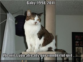Baby, 1998-2011  We miss you already our wonderful girl . . .