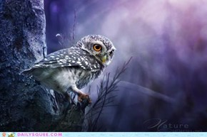 Spotted Owl Spotted