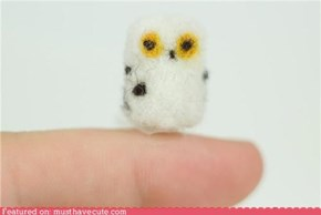 Tiny Pocket Owl